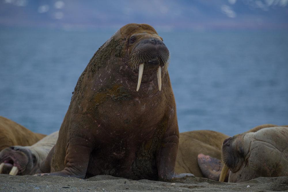Peter Vancoillie - Svalbard 2018 selectie Sofie - 1439.jpg