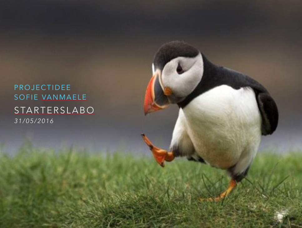 puffin opening blogpost.png