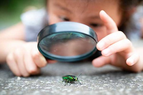 Let's stop sensationalising insects as a source of future