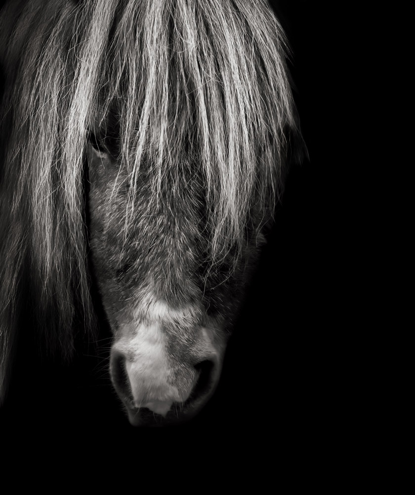 Horse_Photography_Sussex_Surrey.jpg