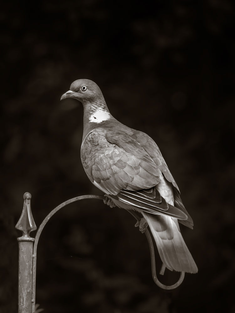 Award_Winning_British_Bird_Photographer_Sussex_England.jpg