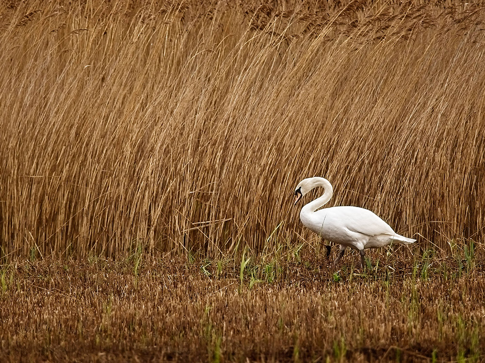 Bird_Photography_Sussex_Surrey_WEB.jpg