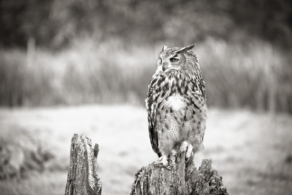 British_Wildlife_Photographer_Surrey_ copy.jpg