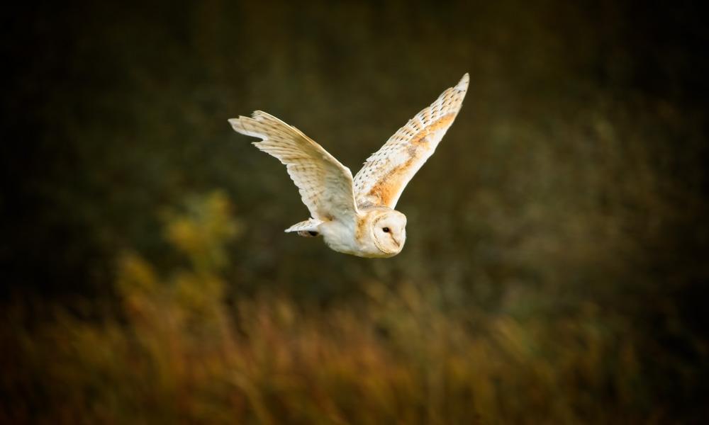 British_Wildlife_Photographer_Surrey_ copy12.jpg