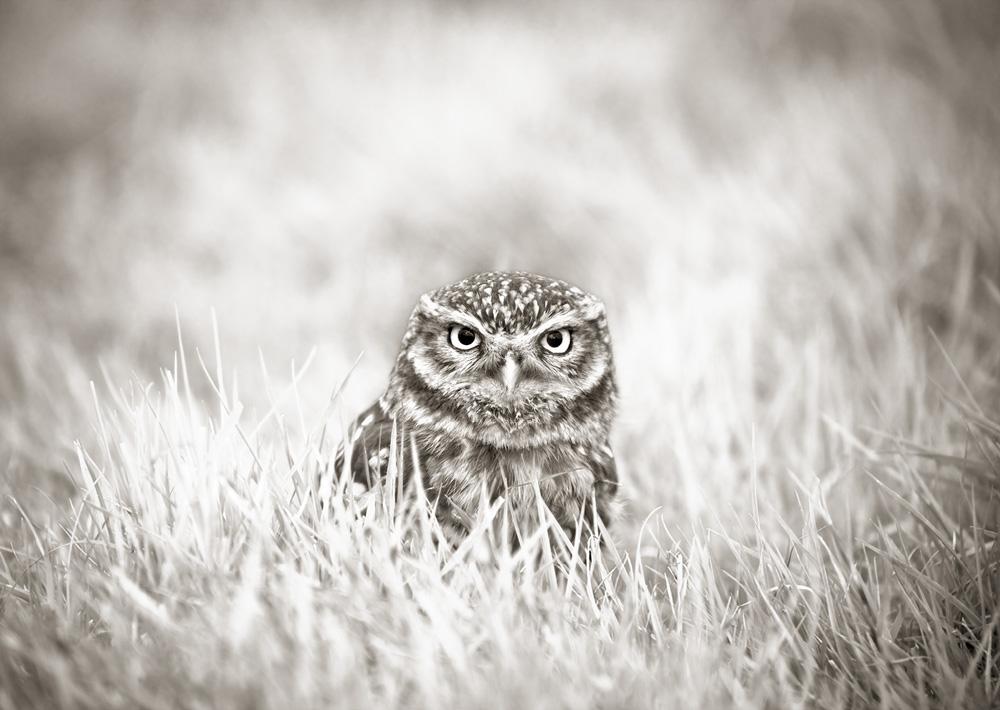 British_Wildlife_Photographer_Surrey_ copy8.jpg