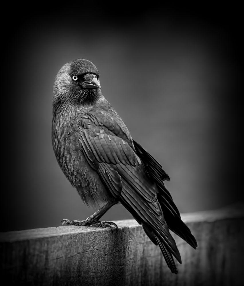 Fine_Art_Pet_Photography_Sussex_Surrey_10.jpg