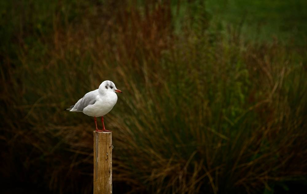Wild_Bird_Photographer_Surrey_ copy.jpg