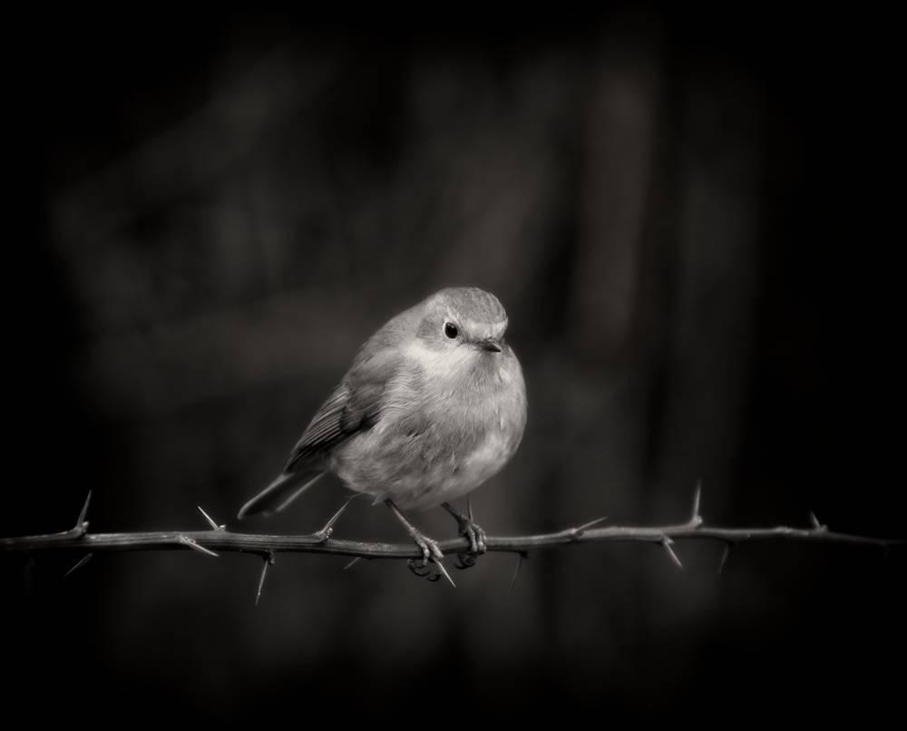 Wildlife_Photography_Sussex_Surrey_1.jpg