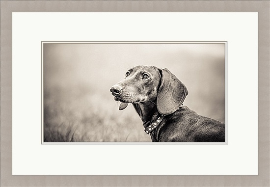 Dog Photographer Brighton East Sussex