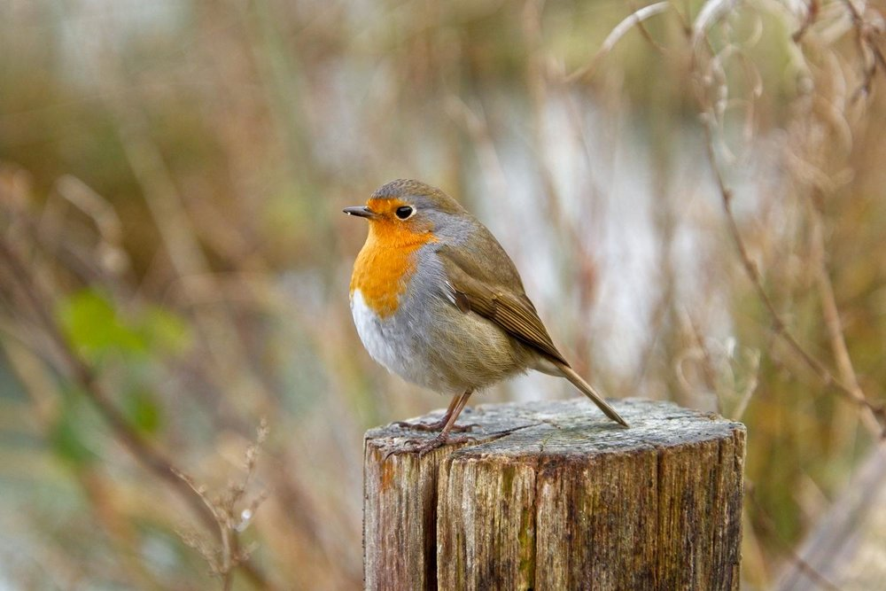 Bird Photography West Sussex