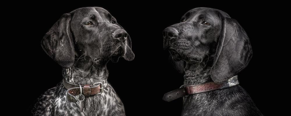 Creative pet dog photographer Brighton Horsham Chichester