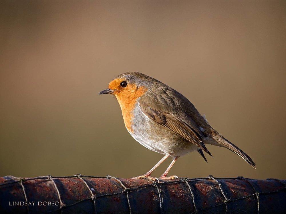 Lenses_Bird_Photography_Leica_100to400_ copy1.jpg