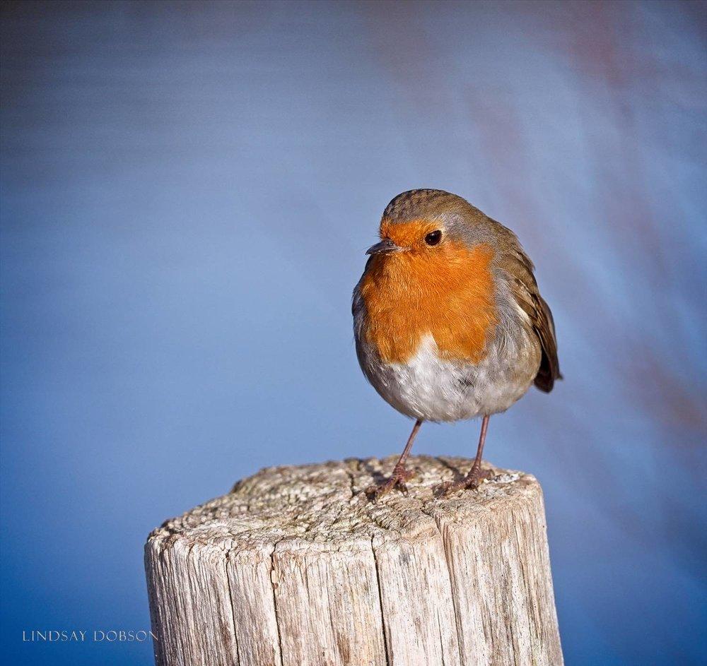 Lenses_Bird_Photography_Leica_100to400_ copy.jpg