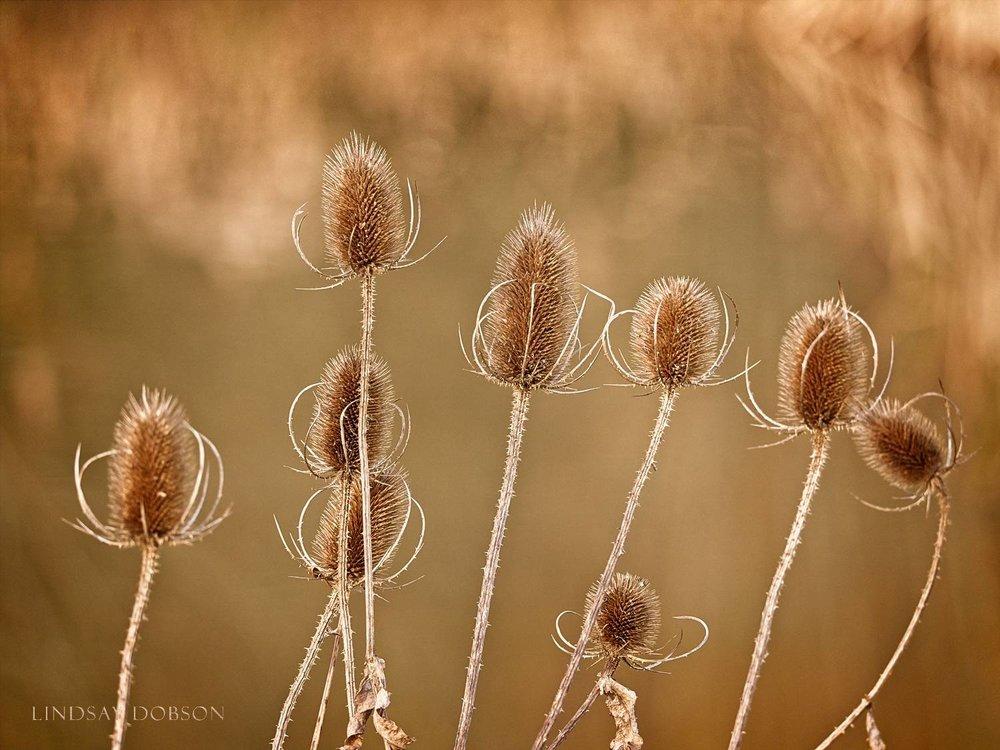 Lenses_Bird_Photography_Leica_100to400_ copy2.jpg