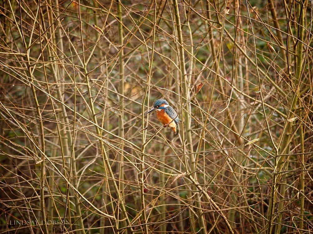 Lenses_Bird_Photography_Leica_100to400_ copy3.jpg