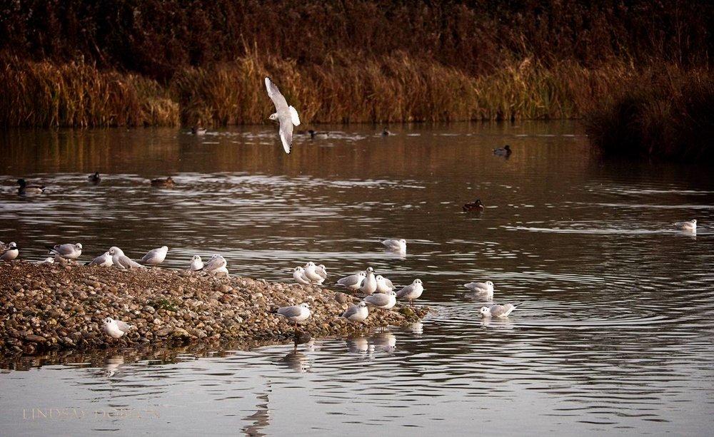 Lenses_Bird_Photography_Leica_100to400_ copy11.jpg