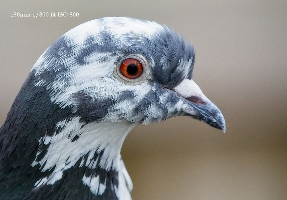 Olympus-Teleconverter-MC14-Field-Review-Bird-Photography-Sussex_-Crop.jpg