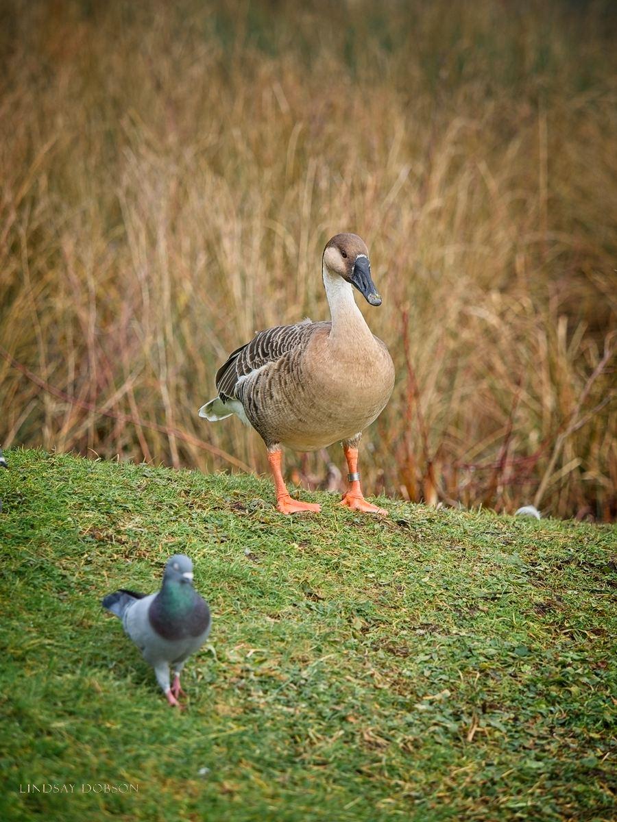 Olympus 40-150 f2.8 Pro Lens Field Review Bird Portraits copy3.jpg