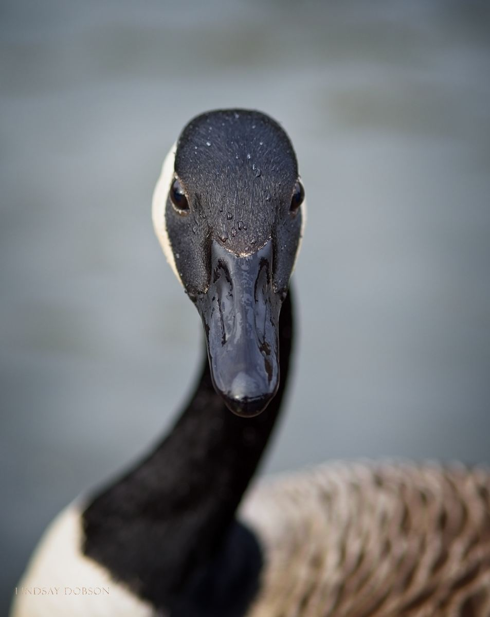 Olympus 40-150 f2.8 Pro Lens Field Review Bird Portraits copy7.jpg
