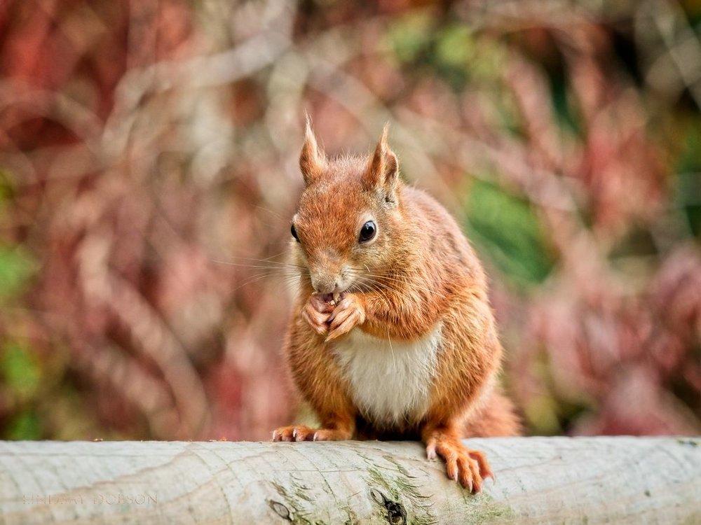 Wildlife Photography Training at the British Wildlife Centre Surrey