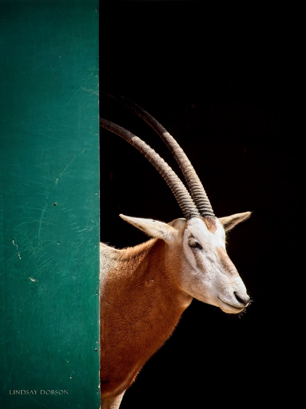 Photography at Marwell Zoological Park Hampshire copy1.jpg