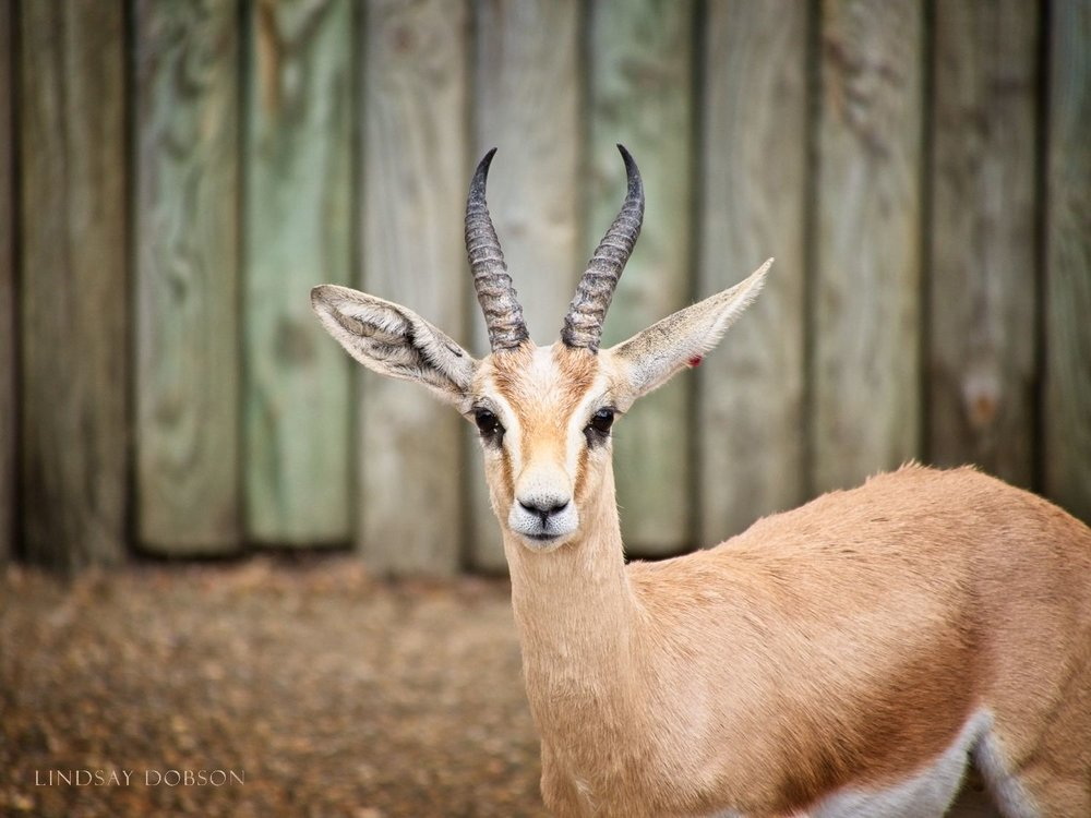 Recreational Photography at Marwell Zoological Park Hampshire