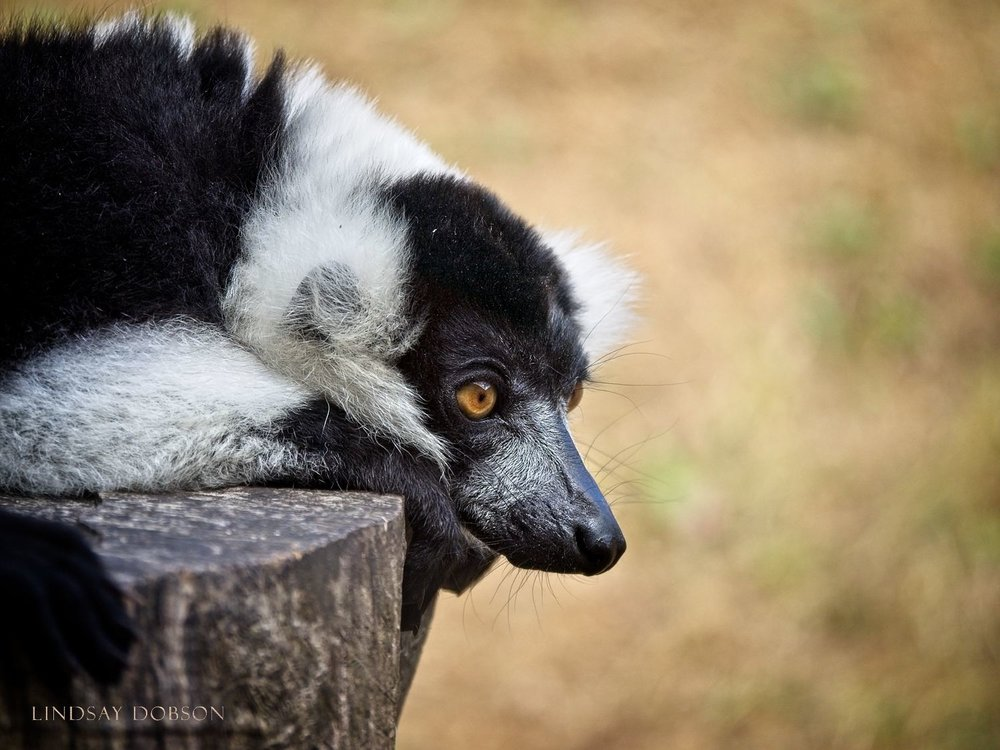 Photography at Marwell Zoological Park Hampshire copy14.jpg