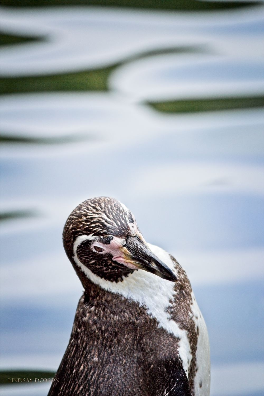 Photography at Marwell Zoological Park Hampshire copy22.jpg
