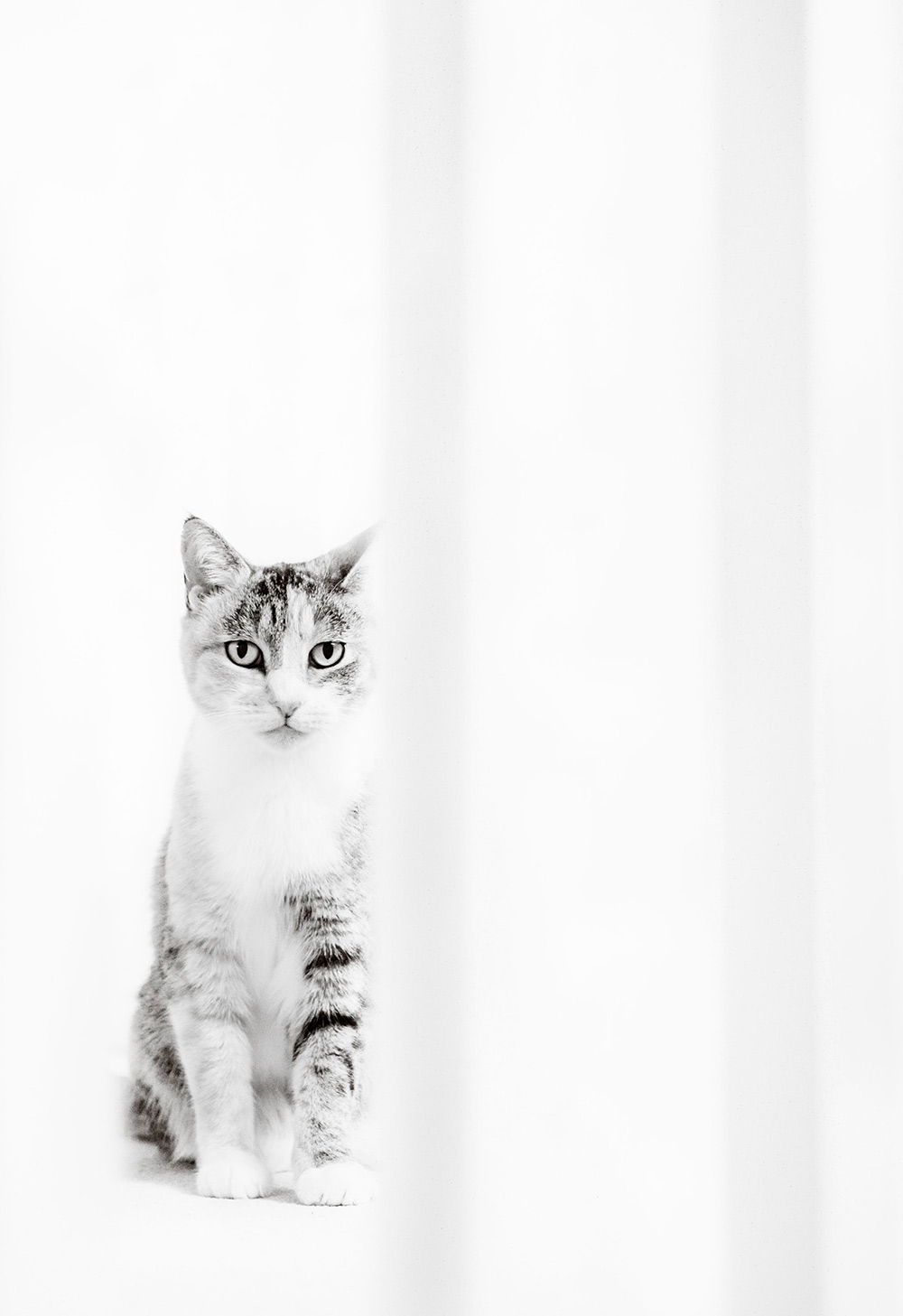 Pet Cat Portrait Photography West Sussex