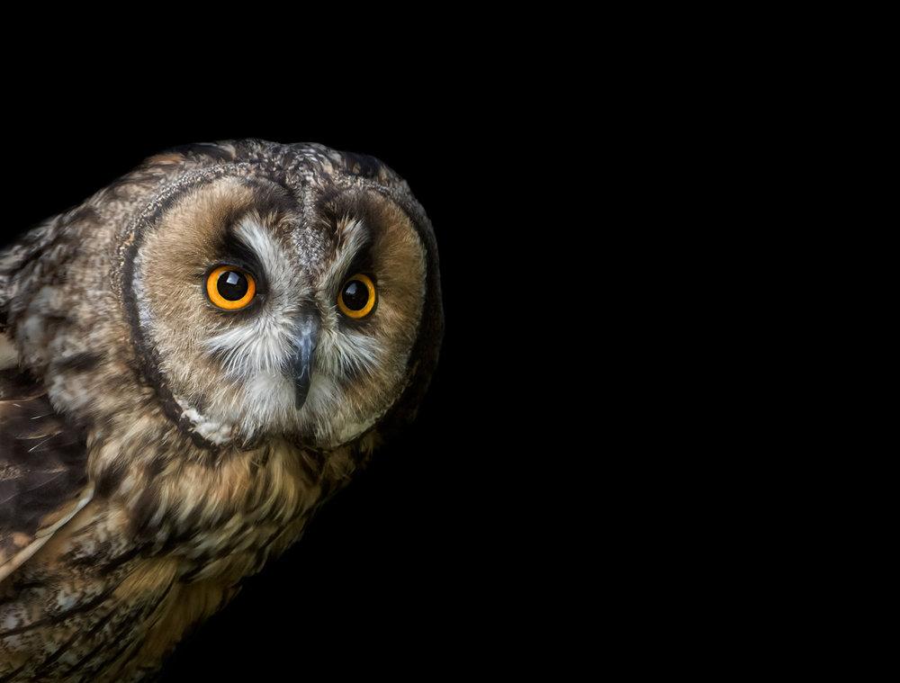 Award Winning Pet Photographer Surrey