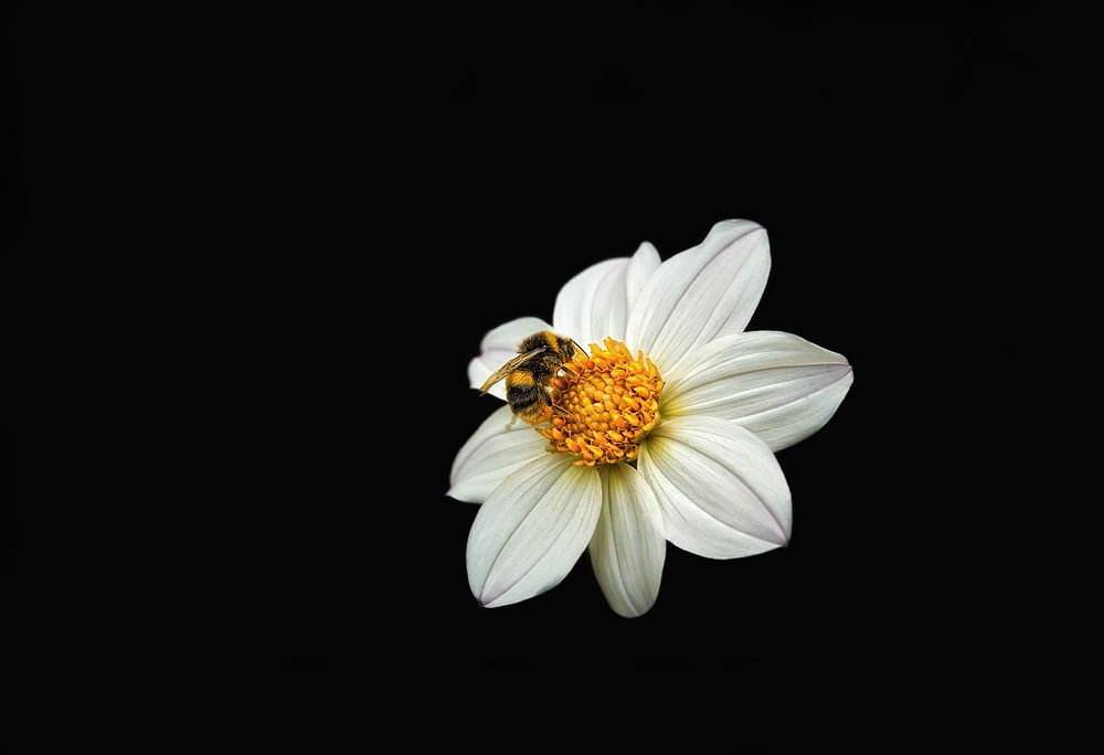 Bees are vital to the natural environment but they're declining here in the UK