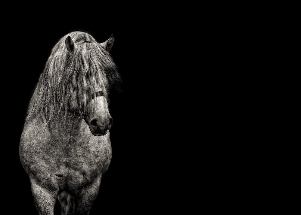 Fine Art Horse Photographer Guildford Surrey