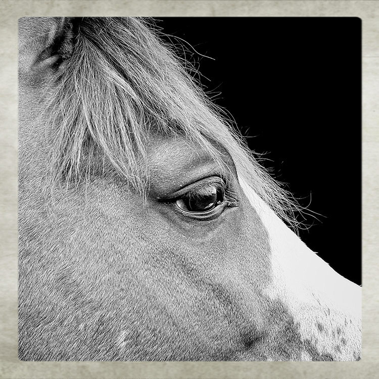 Horse Photographer West Sussex
