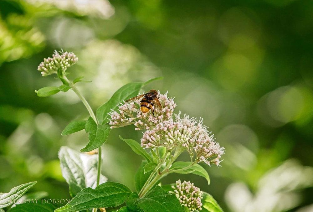 Wildlife_Photography_Sony_A7rii_70to200_Lens_-copy3.jpg