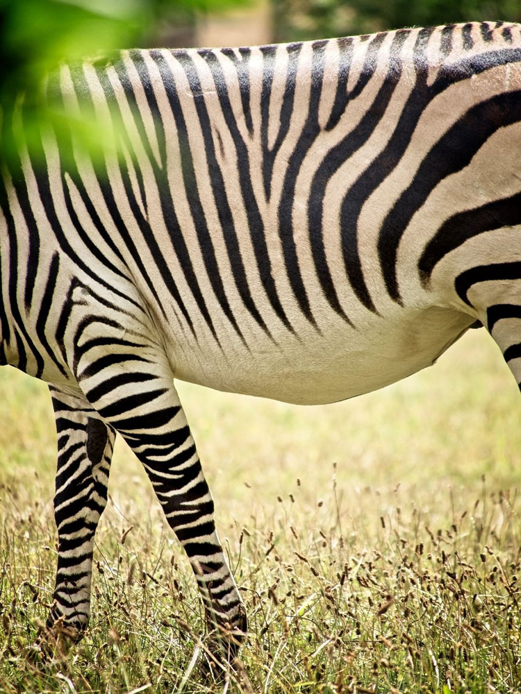 marwell zoo photography