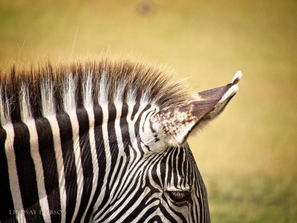 zoo photographer marwell