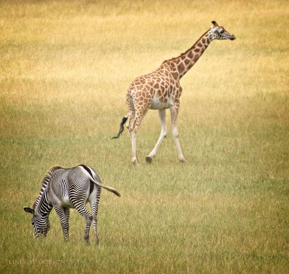 Photography-at-Marwell-Zoological-Park-Hampshire-copy6.jpg