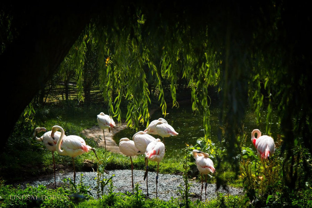 Photography-at-Marwell-Zoological-Park-Hampshire-copy25.jpg