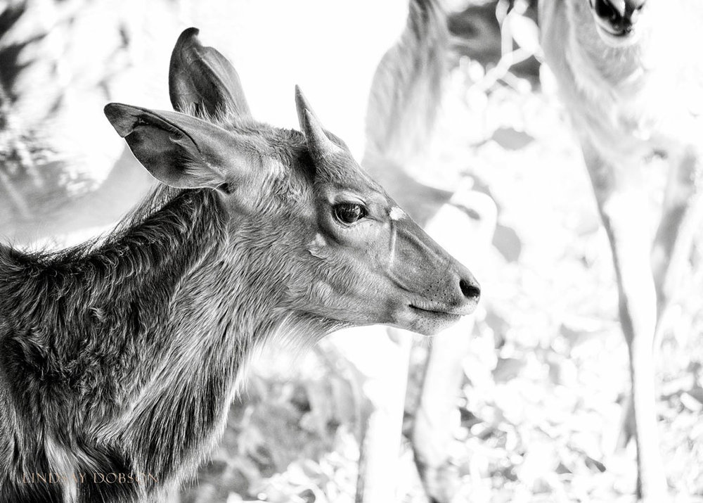 Photography-at-Marwell-Zoological-Park-Hampshire-copy32.jpg