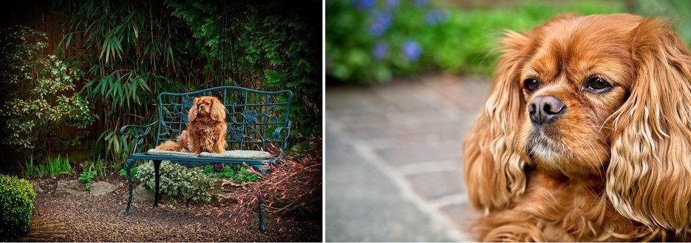 west sussex pet dog photography