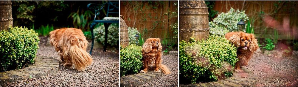 modern pet dog portraits west sussex