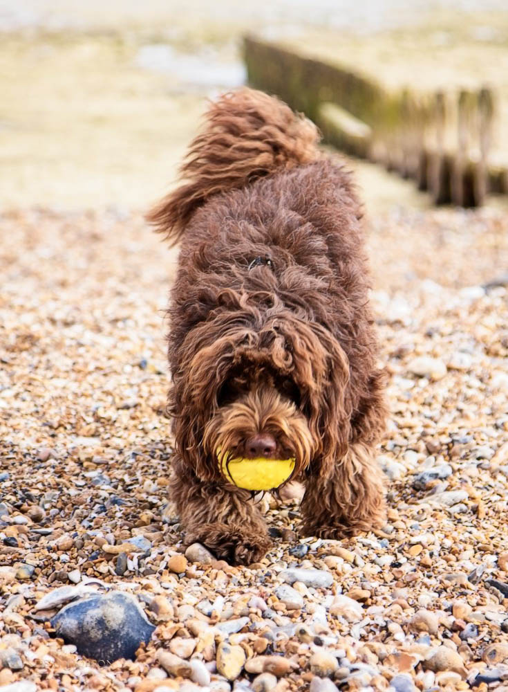 Pet and Family Photography Worthing West Sussex copy15.jpg