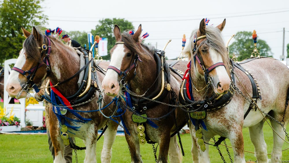 heavy horses south of england show 2017
