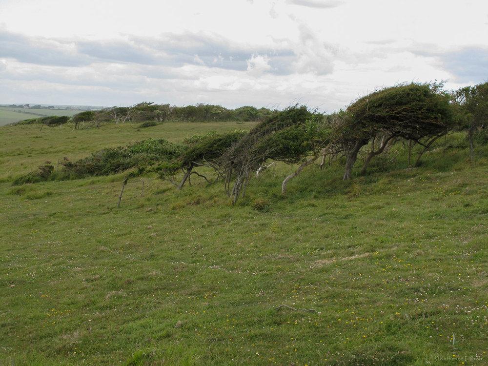 [11]_2009-Wind-Fugue-Tree-Katherine-E-Bash.jpg