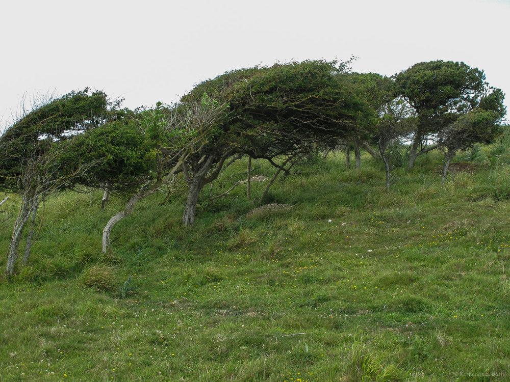 [12]_2009-Wind-Fugue-Tree-Katherine-E-Bash.jpg