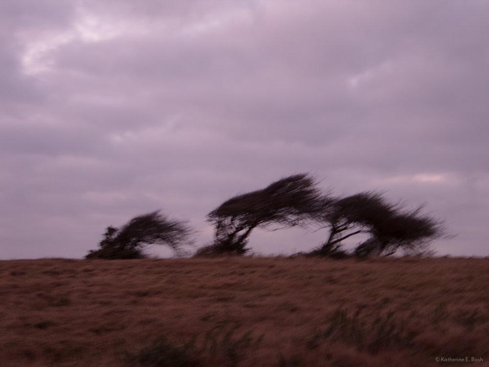 [5]_2009-Wind-Fugue-Tree-Katherine-E-Bash.jpg