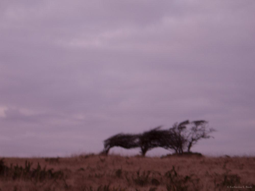 [6]_2009-Wind-Fugue-Tree-Katherine-E-Bash.jpg