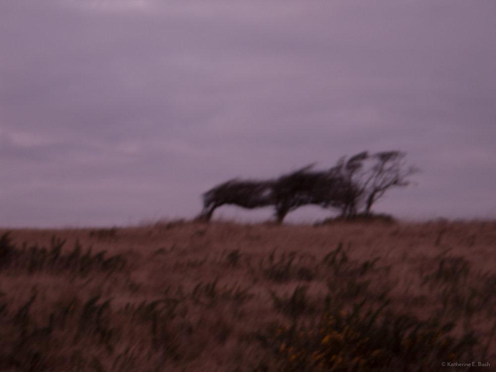 [7]_2009-Wind-Fugue-Tree-Katherine-E-Bash.jpg