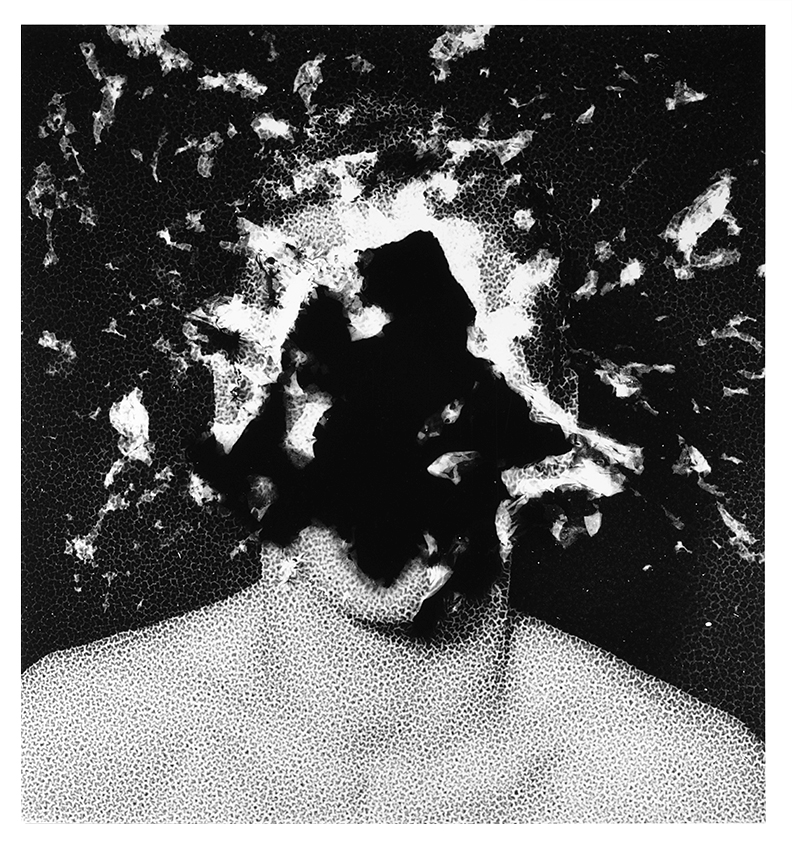 La fission humaine - 2015