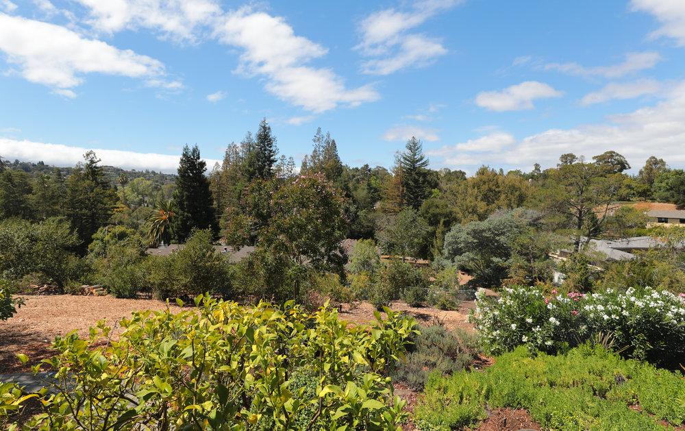 14433 Debell Rd Los Altos Hills Blu Skye Media-3146-X2.jpg